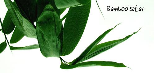 bamboo-star